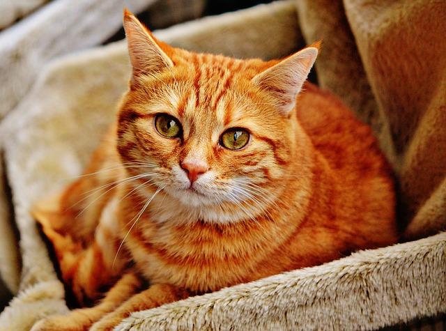 ペットショップで購入した猫が感染症!治療費はどこに請求するの?